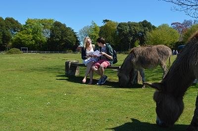 International Students enjoying Brockenhurst Village